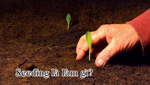Seeding là làm gì?