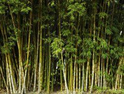 Định luật cây tre – Thành quả đến từ sự kiên trì
