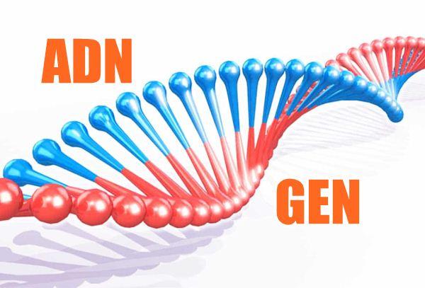 ADN và GEN