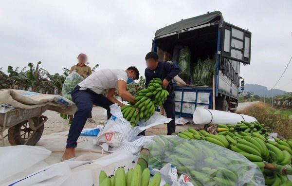 Bốc vác hàng hóa nông sản